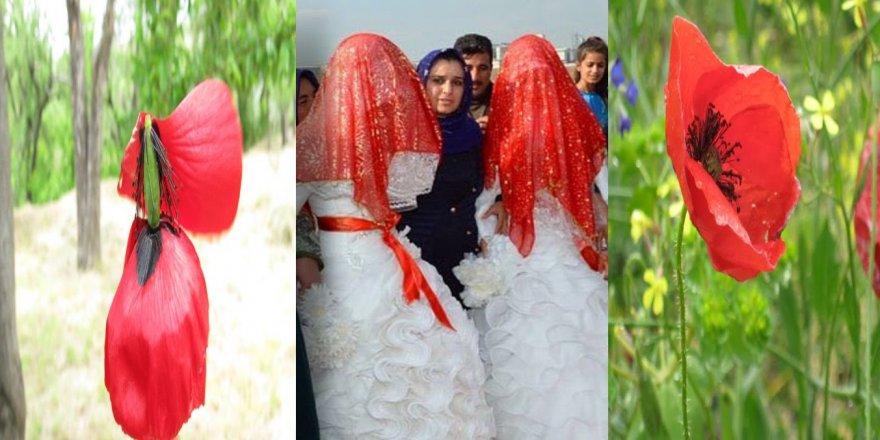 Vilikanê Kurdistanî ra 'Veyveke'