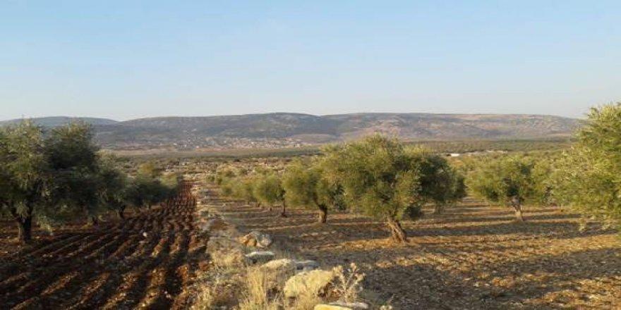 Efrînî di bin gefên çekdaran de nikarin berhemên xwe kom bikin