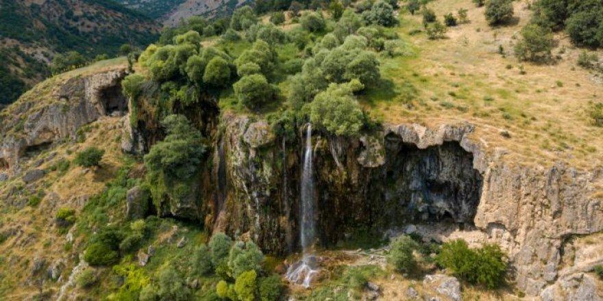 Çewlîg de qasê 35 hektar darî do bêrê birnayîş