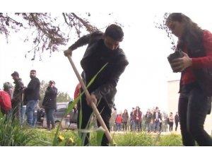 Rewşenbîrên Cizîrê darên zeytûnê ji bo Efrînê diçînin
