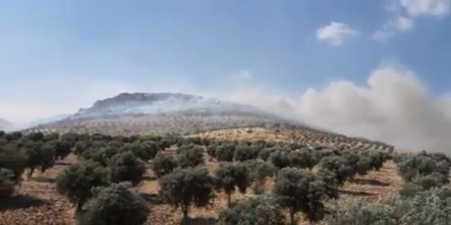 Li Efrînê çiya û darên zeytûnan tên şewitandin