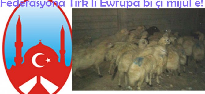 Federasyona Tirk a li Ewrûpayê bi çi mijûl e!