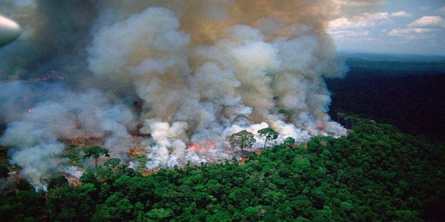 Îsal 72 hezar caran agir bi Daristanên Amazonê ketiye