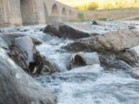 Dîyarbekir: Li Çemê Dîcleyê hemû masî mirine